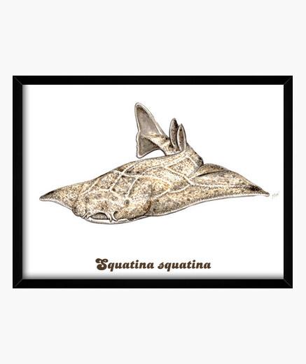 Cadre angelfish, image de requin ange