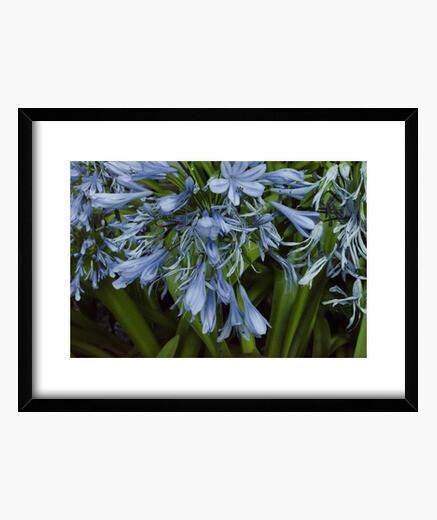 Cuadro Blue flowers