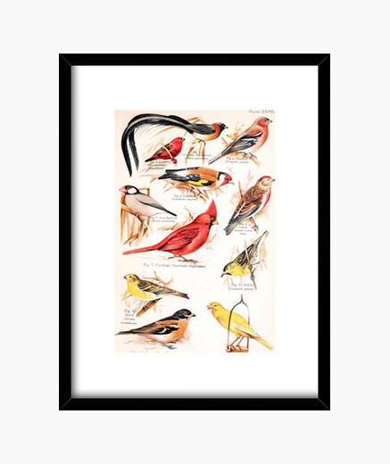Cuadro A Book of Birds, 1908