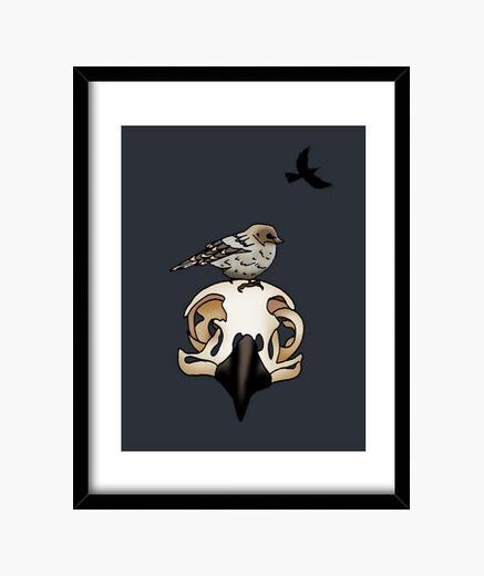 Cuadro Bird skull