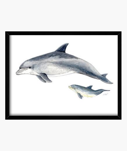 Cuadro Delfin mular