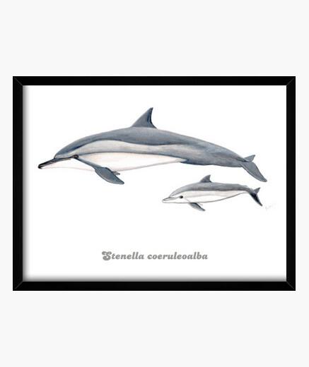 Delfín acróbata (Stenella longirostris) cuadro
