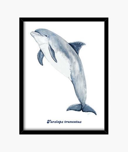 Delfín mular Cuadro con marco vertical 3:4 (30 x 40 cm)