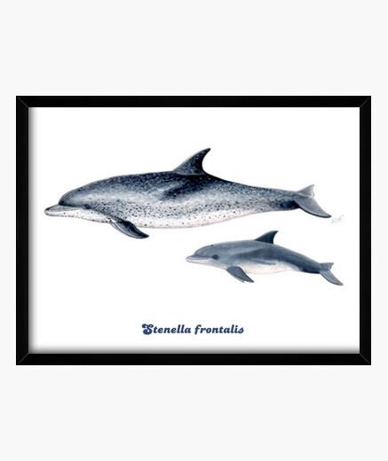 Delfines moteados del Atlántico cuadro