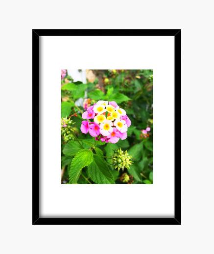 Flor - Cuadro con marco negro vertical 3:4 (15 x 20 cm)