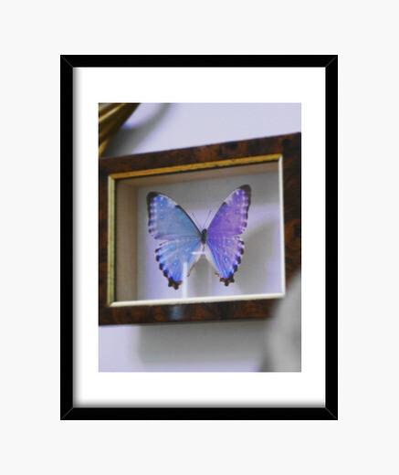 Cuadro mariposa vertical de la decoración ocultura