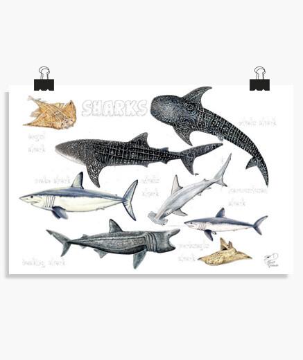 Poster di squali del mondo