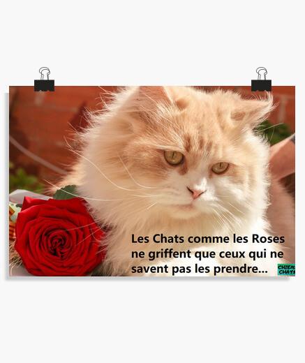 POSTER, les chats comme les roses