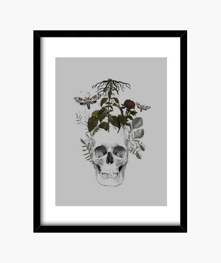 Quadro teschio con fiori e animali