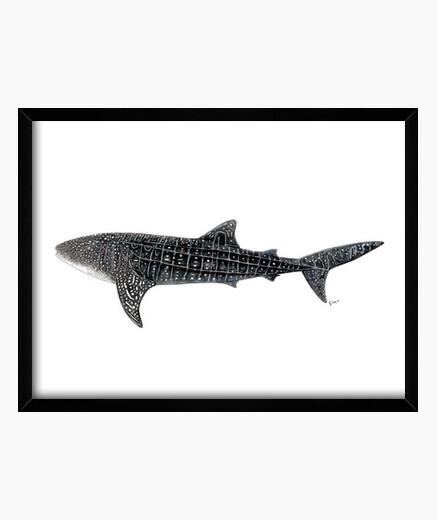 Tiburón ballena Cuadro