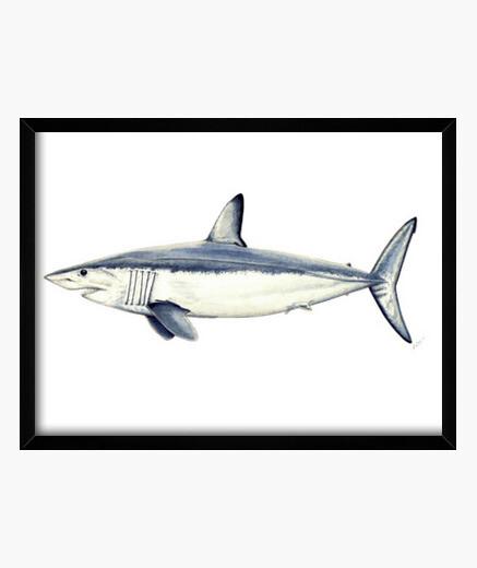 Tiburón Mako - Cuadro con marco horizontal 4:3 (40 x 30 cm)