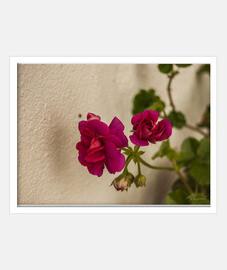 """Flores rosas"", Cuadro con marco blanco horizontal, McHarrell original."