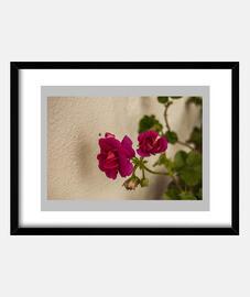 """Flores rosas"", Cuadro con marco negro horizontal, McHarrell original."