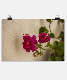 """Flores rosas"", Póster horizontal, McHarrell original."