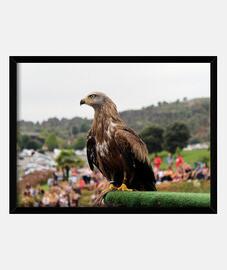 Águila - Cabárceno- Cantabria