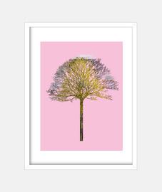 albero xi