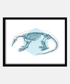 ameisenbär skelett