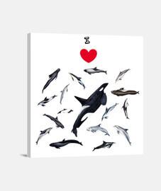 Amo los delfines lienzo