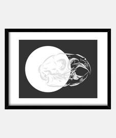 Animal skull 6