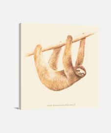 Animals Sloth