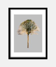 arbre x