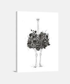 avestruz floral