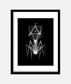 Bacteriophage Print