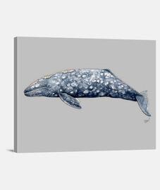 baleine grise de toile (eschricthius robustus)