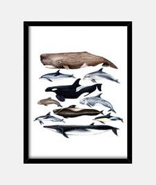 Ballenas, cachalotes, rorcual y delfines cuadro