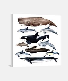 Ballenas, cachalotes, rorcual y delfines lienzo