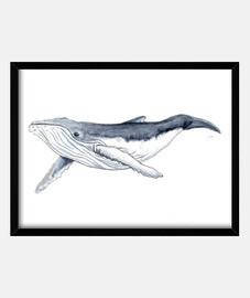 Bebe ballena yubarta - Cuadro con marco horizontal 4:3 (40 x 30 cm)