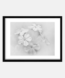 bianchi flowers