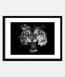 black and white tiger roar