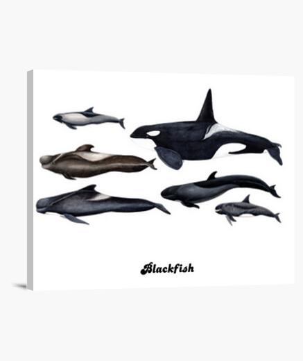 Lienzo Blackfish: orcas y ballenas piloto cuadro