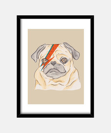bowie pug