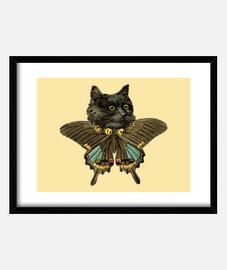 butterfly cat
