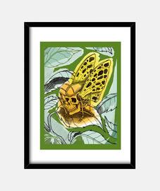 butterfly death
