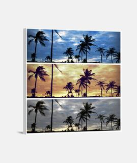 Cambios de palmeras