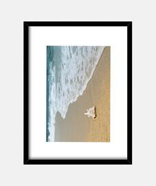 Caracola solitaria en una playa desérti