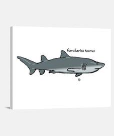 Carcharias taurus Tiburón toro