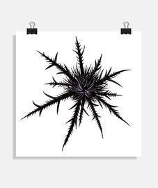 cardo secco nero gotico botanico