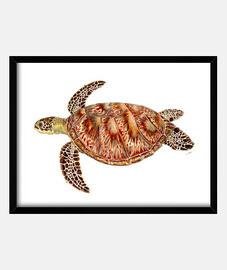 casella tartaruga verde con telaio orizzontale 4: 3 (40 x 30 cm)