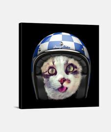 Cat Biker