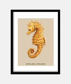 cavalluccio hippocampus pittura ad acquerello