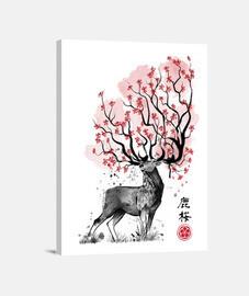 cervo sakura
