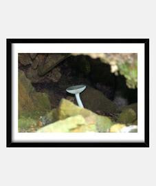 Champignon cavernicole
