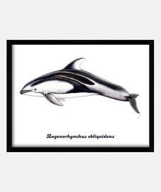 châssis en caisson horizontal 4: 3 (40 x 30 cm) de dauphin flancs blancs