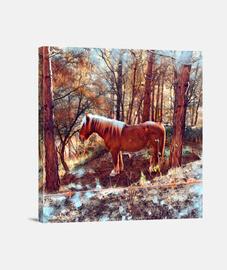 cheval dans les bois