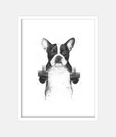 chien censuré