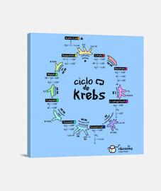 Ciclo de Krebs (fondos claros)